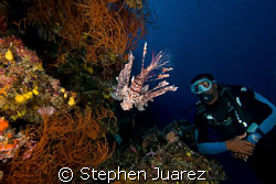 Follow the Mo,Moses works as a Dive Guide on Fiji Aggress... by Stephen Juarez 